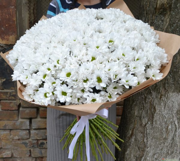 51 хризантема ромашка