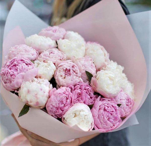 Пионы розовые Новосибирск
