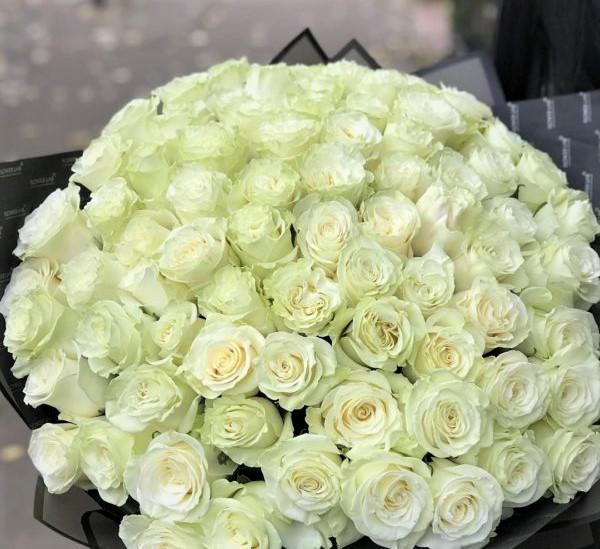 101 Роза Новосибирск Белая №81